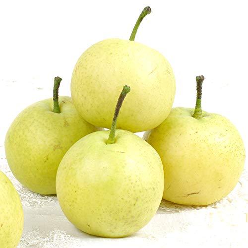 梨 青森・南部産 ちび 八雲梨(4.5kg)ご家庭用 小玉 やくも なし 二十世紀梨の改良品種 フルーツ 果物 国華園