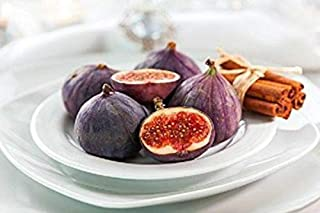 Little Miss Figgy Beer's Black Edible Fig Fruits Live Plant Ficus Carica Sweet/Dwarf 3