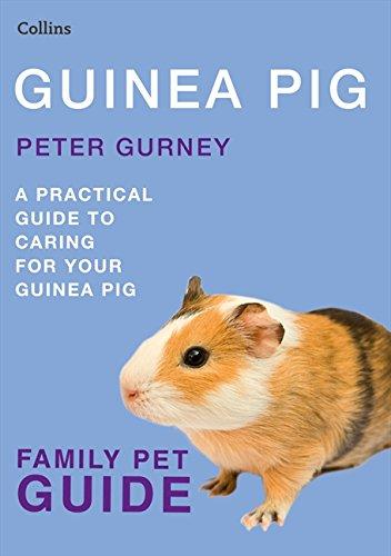 Guinea Pig (Collins Family Pet Guide)