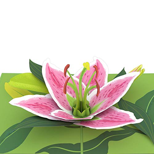 Lovepop Lily Bloom Pop Up Card - 3D Card, Pop Up Birthday Card, Anniversary Pop Up Card, Mother's Day Card, Card for Mom, Card for Wife, Popup Greeting Card, 3D Flowers Card