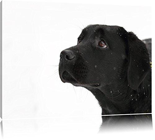 Schwarzer Labrador im Schnee Leinwand, XXL riesige Bilder fertig gerahmt mit Keilrahmen, Kunstdruck auf Wandbild mit Rahmen, günstiger als Gemälde oder Ölbild, kein Poster...