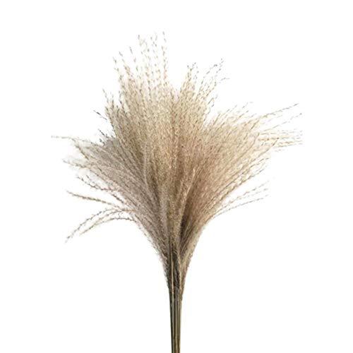 Payne Roosevelt 50/100 pezzi naturali secchi piccoli pampas erba fragmiti piante artificiali decorazioni