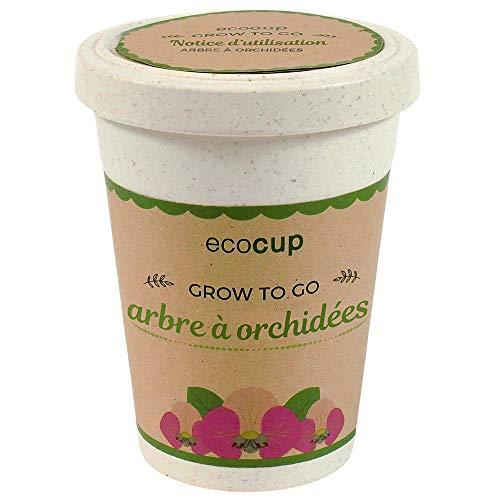 Feel Green Ecocup, Arbre À Orchidées, Idée Cadeau (100% Ecologique), Grow-Your-Own/Kit Prêt-à-Pousser, Plantes Dans Coffee Cup 10 x 8 cm, Produit En Autriche