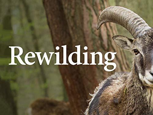 Rewilding – Season1