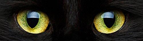 wandmotiv24 Pared Trasera de Cocina Primer Plano de Gato Negro 210 x 60 cm (W x H) - 3 mm de Aluminio Protector de Salpicaduras de la Pared Posterior del nicho Reemplazo del Espejo del azulejo M1013