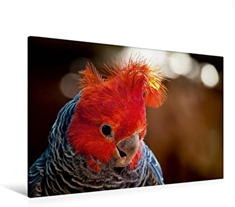 Calvendo Premium Textil-Leinwand 120 x 80 cm Quer-Format Helmkakadu   Wandbild, HD-Bild auf Keilrahmen, Fertigbild auf hochwertigem Vlies, Leinwanddruck von Ulrich Brodde Tiere Tiere