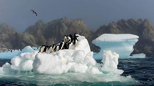 MAIYOUWENG Erwachsenenpuzzle Jigsaw Puzzle Holz Puzzle 1500 Teile A Group of Penguins On Ice Spielset Puzzle,Unterhaltsame Für Jung Und Alt Spaßige 87x57cm(34.3x22.4in)