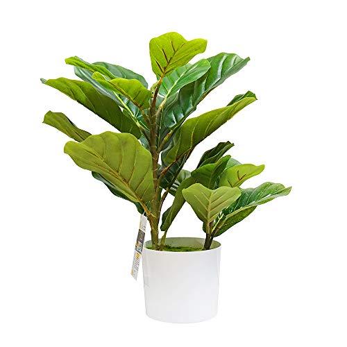 planta ficus natural fabricante Artesy