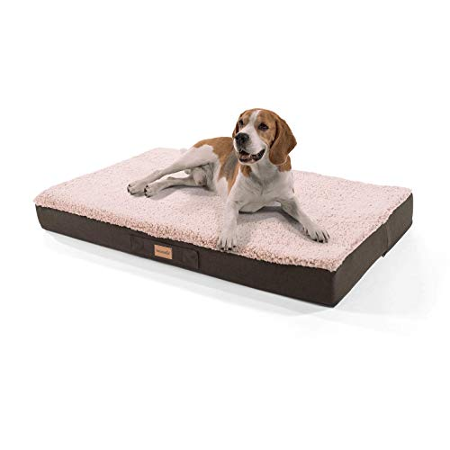 brunolie Balu großes Hundebett in Beige, waschbar, orthopädisch und rutschfest, kuscheliges Hundekissen mit atmungsaktivem Memory-Schaum, Größe L (100 x 65 x 10 cm)