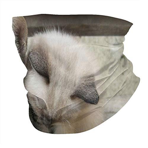 pequeños gatitos birman gatito pequeño gato gris doméstico gatos mascotas sin costuras Multifuncional Headwear Variedad Bufanda de la Cabeza Diseño Personalizado Capucha Deportes al aire libre Diadema