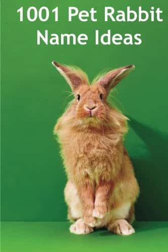 1001 Pet Rabbit Name Ideas: The most popular, quirky, and fun names you could give your pet rabbit!