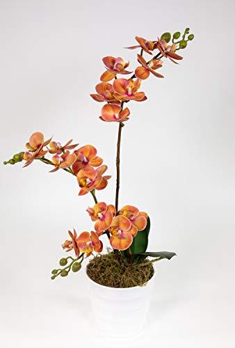 Seidenblumen Roß Orchidee Real Touch 56x30cm orange ZJ Kunstblumen Kunstpflanzen künstliche Blumen Pflanzen Orchideen