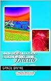 Diario Rosas en la Playa + Fotografía Grace Divine (LIBROS EN ESPAÑOL - BOOKS IN SPANISH & SOME IN ENGLISH)