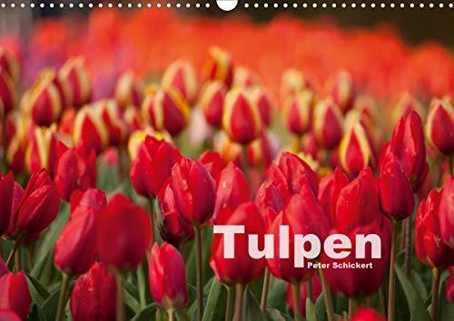 Tulpen (Wandkalender 2021 DIN A3 quer)