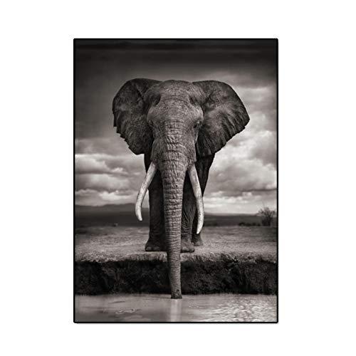"""Cuadros africanos - Lienzo de elefante blanco y negro Pintura de carteles de animales Impresiones Arte de la pared para la decoración del hogar de la sala de estar 30x55cm (12""""x22"""") Sin marco"""