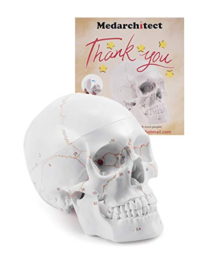 Upgraded Life Size Human Head Skull Anatomical Model with Newest Laser-Etched Fonts Not Hand Write Number, Not Smudged for Medical Student Human Anatomy Study Course