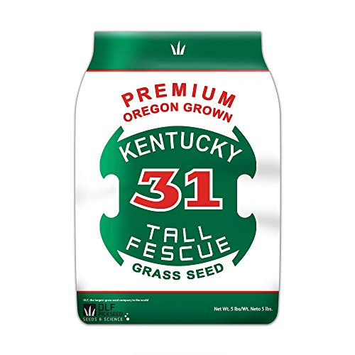 Premium Oregon Grown Kentucky 31 Tall Fescue Grass Seed (5