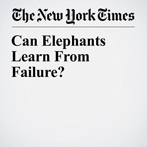 Can Elephants Learn From Failure? copertina