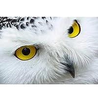 MHSHM 5Dダイヤモンド絵画モザイクDIY風景フクロウダイヤモンド刺繡ラインストーン装飾工芸品ホームギフトラウンドドリル40X50Cm(16X20Inch)