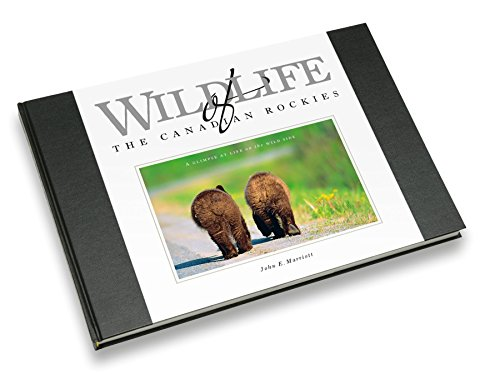 Wildlife of the Canadian Rockies: A Glimpse at Life on the Wild Side