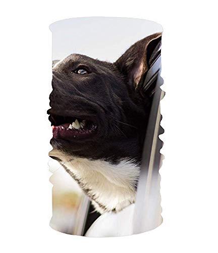 dingjiakemao Stylish Puppy,Collar,Fur UV Headband Quick Dry Ultra Soft Elastic Handscarf Microfiber Headwear Outdoor Bandana Magic Scarf Face Mask Unisex