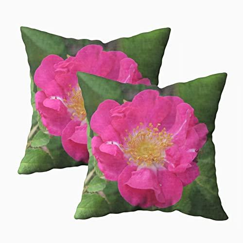 Funda Almohada 45x45cm,Juego de 2 Fundas de Cojín,Floración Rosa Fucsia Inglés,Funda Almohada Decorativa,para sofá