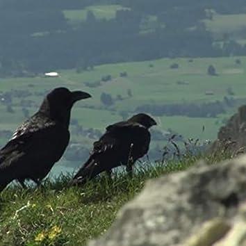 Raven Valley
