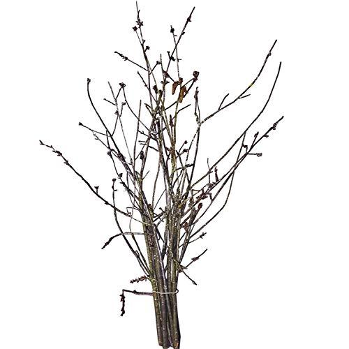 10 Kirschzweige ca. 40-80 cm - echte Zweige vom Kirschbaum | Barbara-Zweige | Baumzweige mit Kirschblüten | Osterzweige