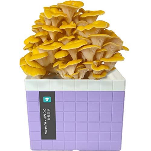 Rowe Oyster Mushroom Spawn Esporas, Semillas de Setas orgánicas de Interior Spores Spores Plant Gotear Kit, Harvest Gourmet Fungi Setas en 10 días (Color : Purple)