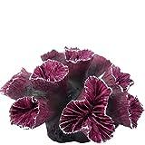 YiGanQiang Adornos de Coral de polyresin Aquarium Coral Decoración Fish Tanque Aquarium Decoración (Color : Purple)