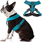 Gooby Comfort X Harness Dual Snap - Turquoise, Medium - No Pull Small Dog Harness with Rotational Buckles and Patented Choke-Free X Frame - Dog Harness for Medium Dogs No Pull and Small Dogs