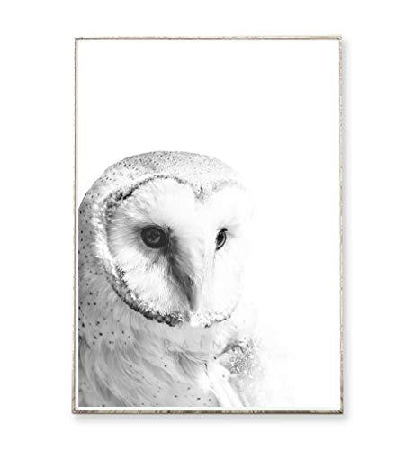 DIN A4 Kunstdruck Poster SCHLEIEREULE -ungerahmt- Vogel, Eule, skandinavisch, nordisch