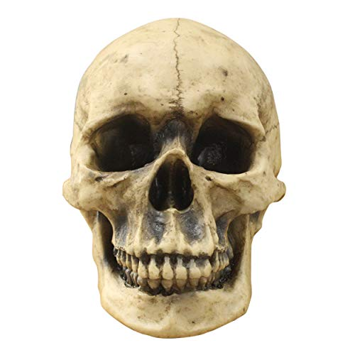 Wall Charmers Life Size Human Skull - 8.5 inch Realistic Faux Human Anatomy - Table Top Skeleton Head Home Decor