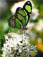 ダイヤモンド絵画蝶ダイヤモンドモザイク動物クロスステッチ家の装飾45x60cm