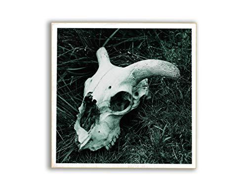 Schafschädel, Foto auf Holz, im Quadrat, 13 x 13 cm, Lost Place, marode, Gothic, Irland