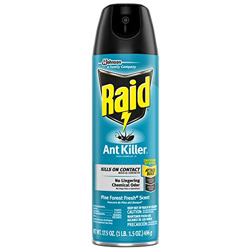 Raid Ant Killer Spray Pine Forest, 17.5 OZ (17.5 OZ ( Pack of 1 ))