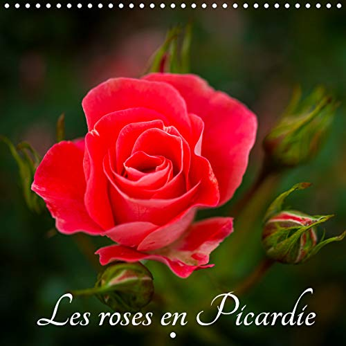 Les roses en Picardie (Calendrier mural 2020 300 × 300 mm Square): Une magnifique rose de Picardie pour tous les jours de l'année ! (Calendrier mensuel, 14 Pages ) (Calvendo Nature)