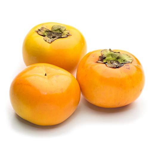 【産地直送】 熊本県産 太秋柿 赤秀 約3.5kg 8〜14玉入り