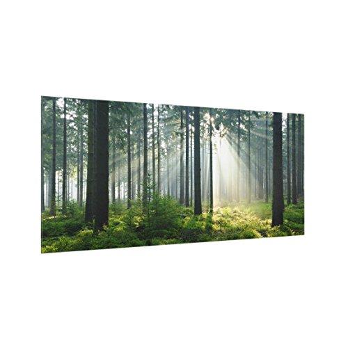 Bilderwelten Panel antisalpicaduras de Cristal - Enlightened Forest - Horizontal 1:2, Panel antisalpicaduras Panel de Vidrio para Cocina Panel Protector contra Salpicaduras, Tamaño: 40cm x 80cm