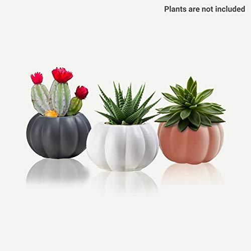 Charming Melodie-süße kleine Kürbis-Keramiktentöpfe, rund, Set von 3 Mini-Kaktus-Pflanzgefäßen, Blumentopf/Container, Sukkulenten-Blumentöpfe mit Drainage6,3 x 8,3 x 4,6 cm
