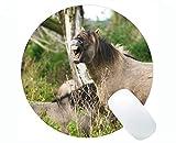 Yanteng Cojín de ratón de la Forma Redonda Animales Caballos Naturaleza Base de Goma Alfombrillas de ratón para computadoras