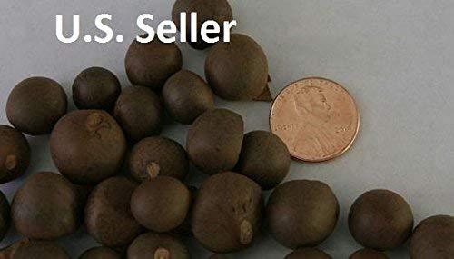 vegherb 20 Samen, Teepflanze/Baum/Strauch, Camellia Sinensis, Grün/Schwarz/Oolong, Nicht-Chinesisch