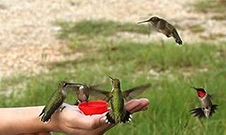 Alyf Market 25 Hummingbird Vine Seeds-1089