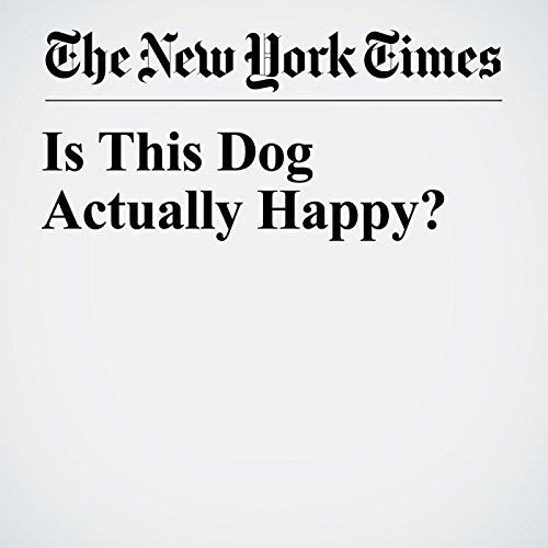 Is This Dog Actually Happy? copertina