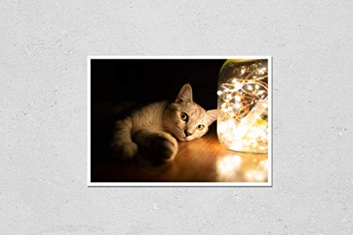 KwikMedia Poster Reproduction of Low Key Image Cat and led Strip Lights in Glass jar