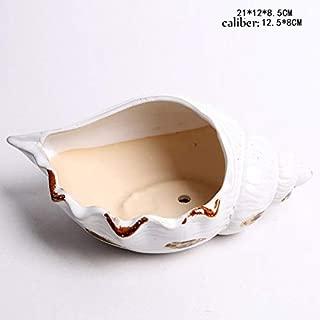 Best conch pots for sale Reviews