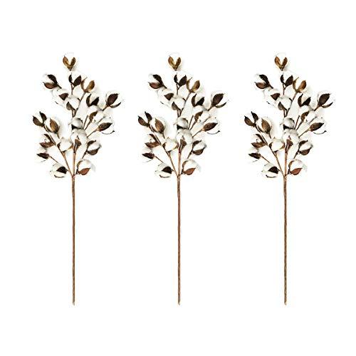 Wei Xi Katoen Stammen 3 Pack, 21.7 inch Boerderij Katoenen Bolls Decoratie Bloemen Picks - Rustieke Stijl Vaas Vuller Decoratie Bloem