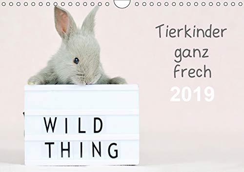 Tierkinder ganz frech (Wandkalender 2019 DIN A4 quer): In jedem Monat präsentiert ein niedliches Tierkind eine Leuchtbox mit einem frechem Spruch (Monatskalender, 14 Seiten )