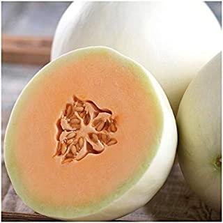 White Muskmelon Seeds 20 Seeds Sugar Jar Melon Delicious Fruit Garden Seeds B087