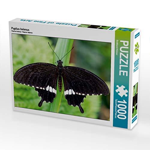 CALVENDO Puzzle Papilus helenus 1000 Teile Lege-Größe 64 x 48 cm Foto-Puzzle Bild von Burkhard Körner